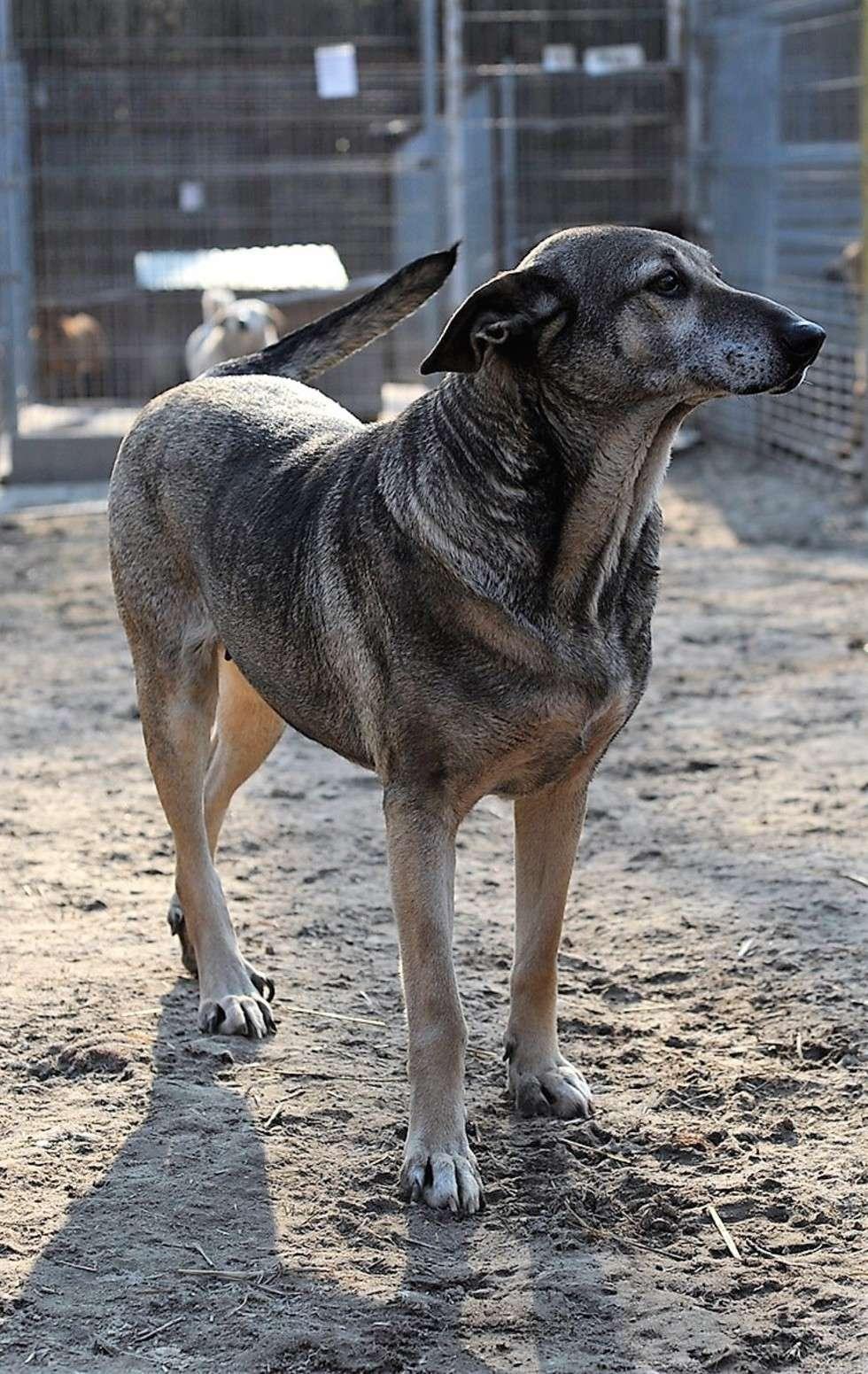 galeria psy do adopcji ze schroniska w krzesimowie