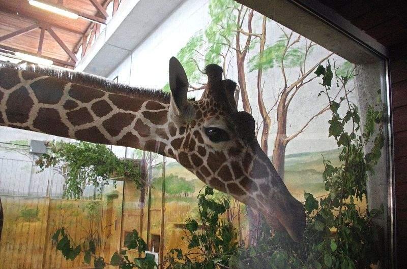 szybkie randki w zoo Paris serwis randkowy za darmo
