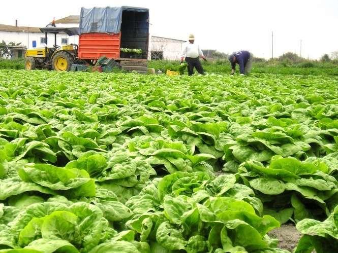 Randki dla młodych rolników
